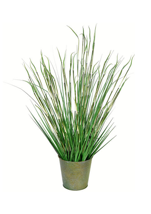 Vickerman Potted Green Reed Grass