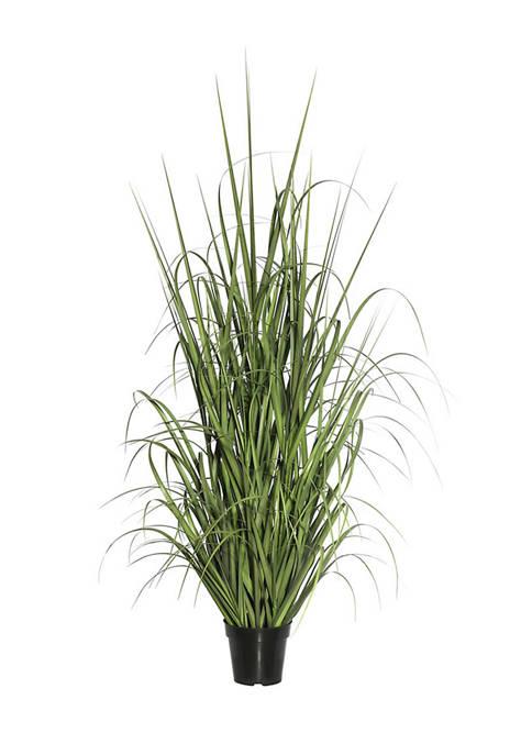 Vickerman Green Potted Ryegrass
