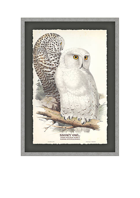 Snowy Owl Archival Framed Art Print