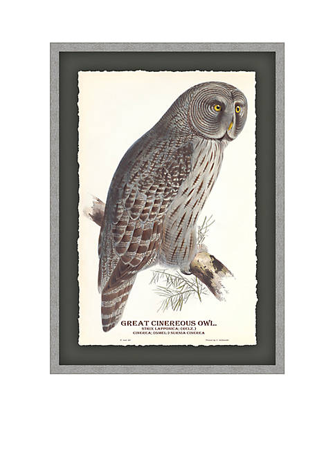Biltmore® Great Cinereous Owl Archival Framed Art Print