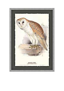Barn Owl Archival Framed Art Print