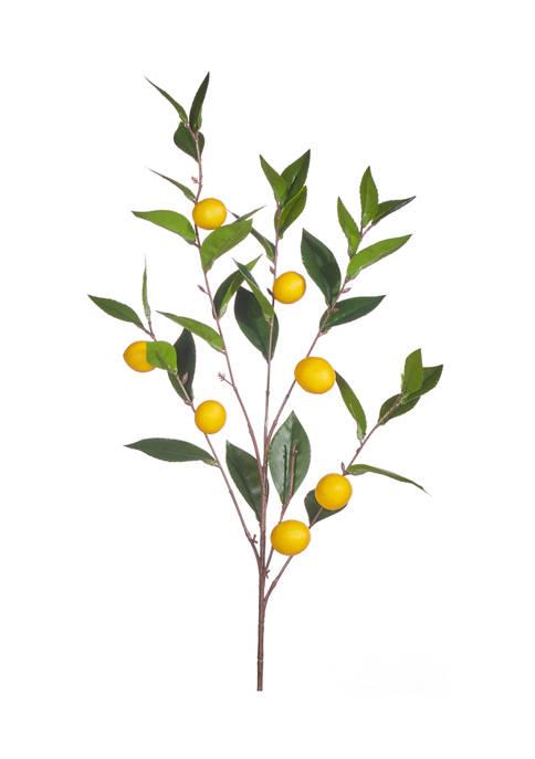 RAZ Imports Inc. Lemon Spray