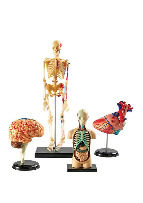 Learning Resources Anatomy Models Bundle